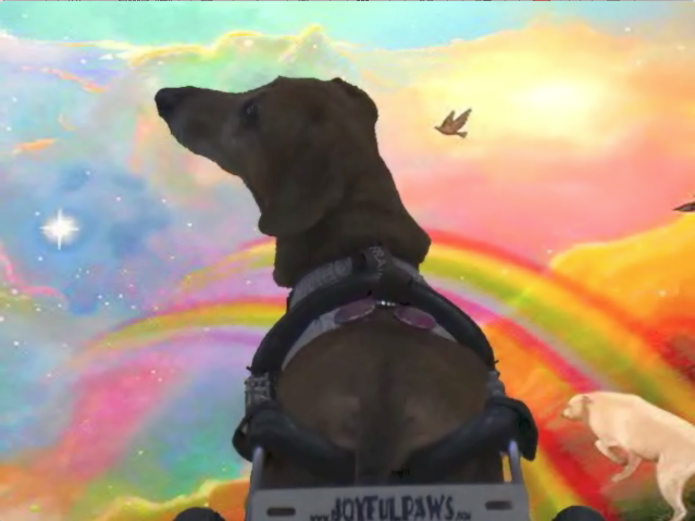 Frankie Crossing the Rainbow Bridge